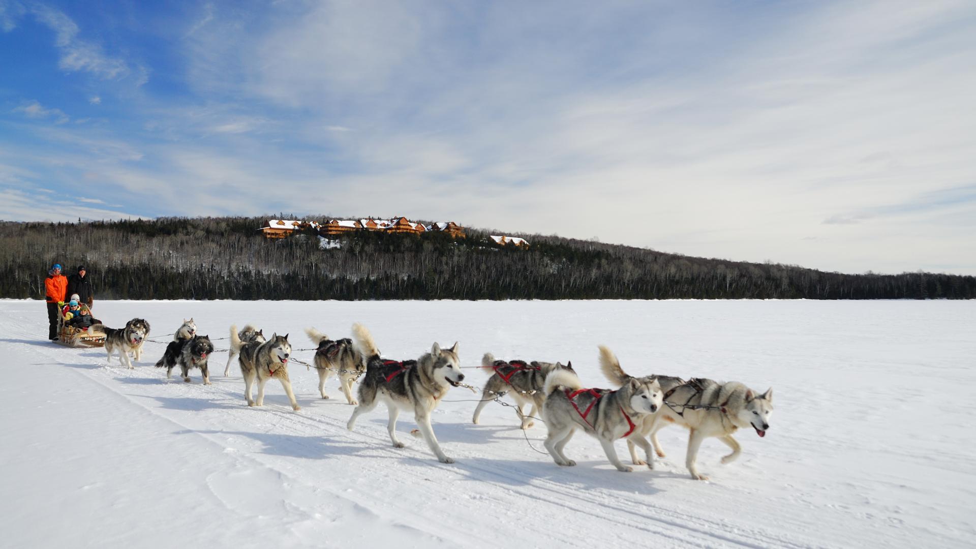Quebec travel guide: huskies