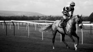 Newmarket flat racing guide 2020
