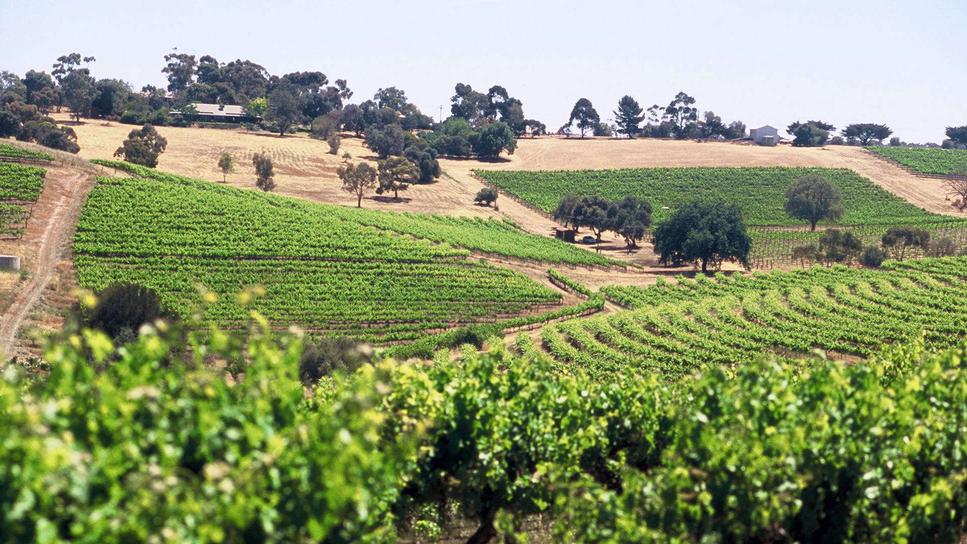 McLaren Vale vineyards owned by Penfolds
