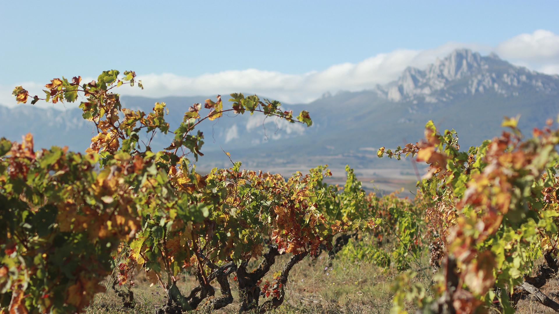 Artadi winery in Spain