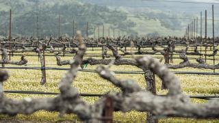 Vérité's vineyards are perfect for growing Bordeaux varietals