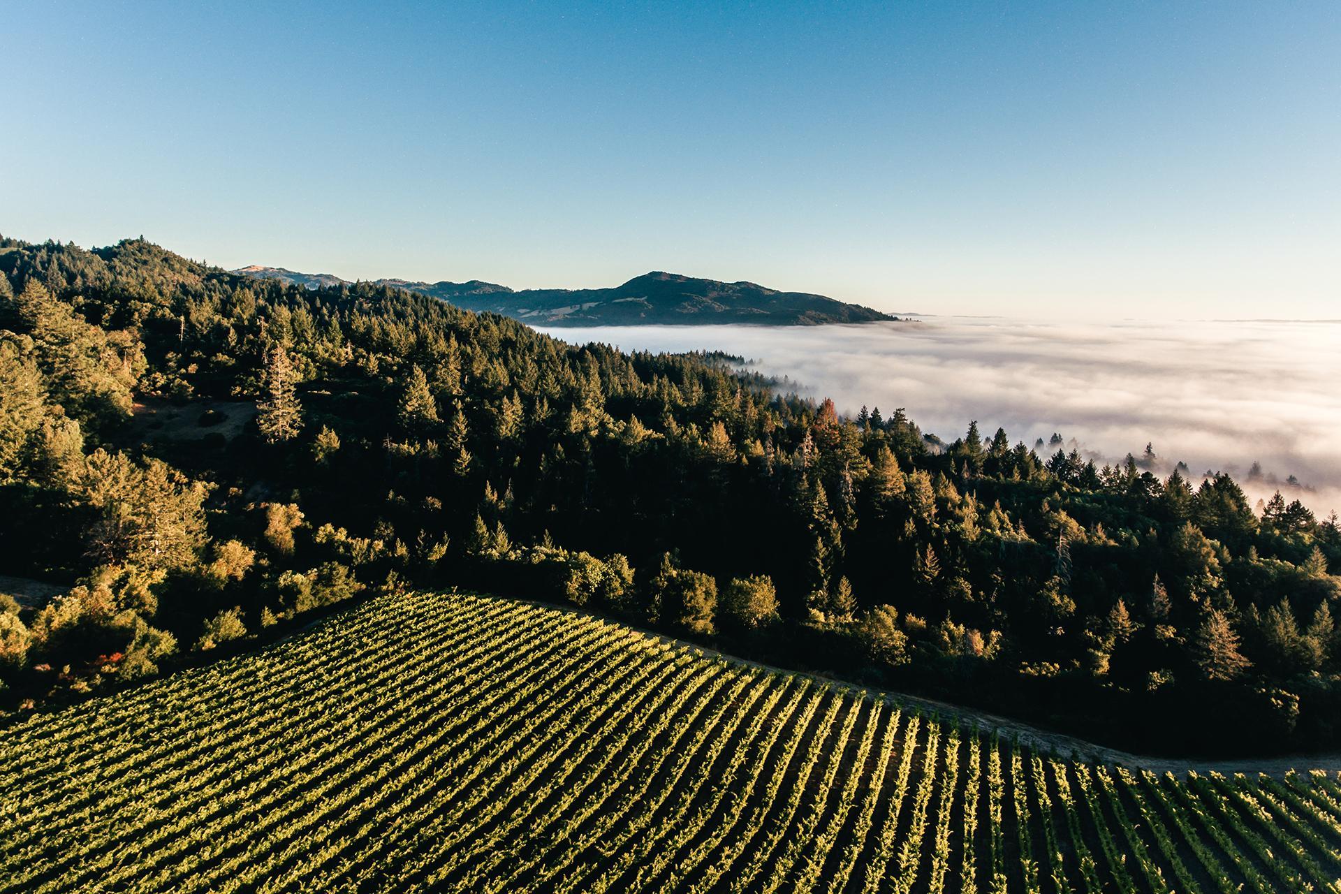 Mt Brave vineyards